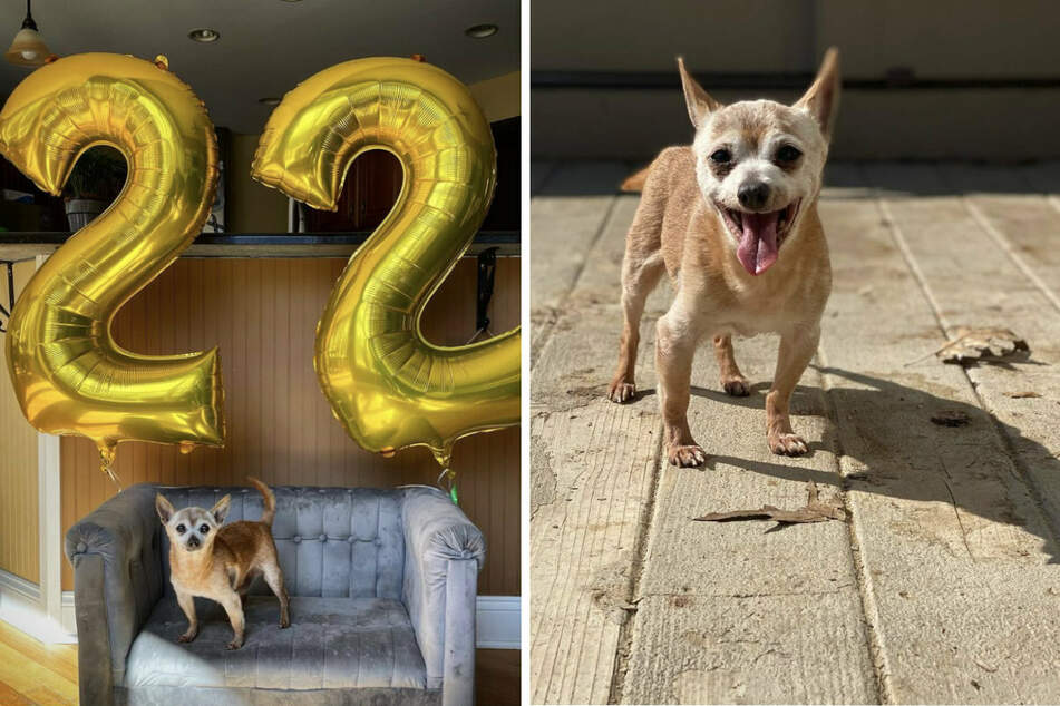 Bobo got his very own 22nd birthday party! (collage)