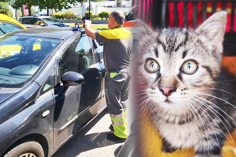 """Kleine Katze in Motorraum gefangen: """"Gelber Engel"""" rettet Tier!"""