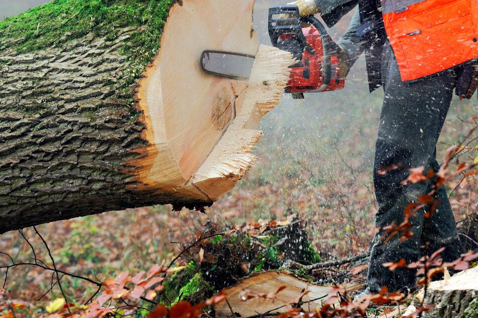 Der 63-Jährige starb 20 Minuten, nachdem er von einem umgestürzten Baum getroffen wurde. (Symbolfoto)