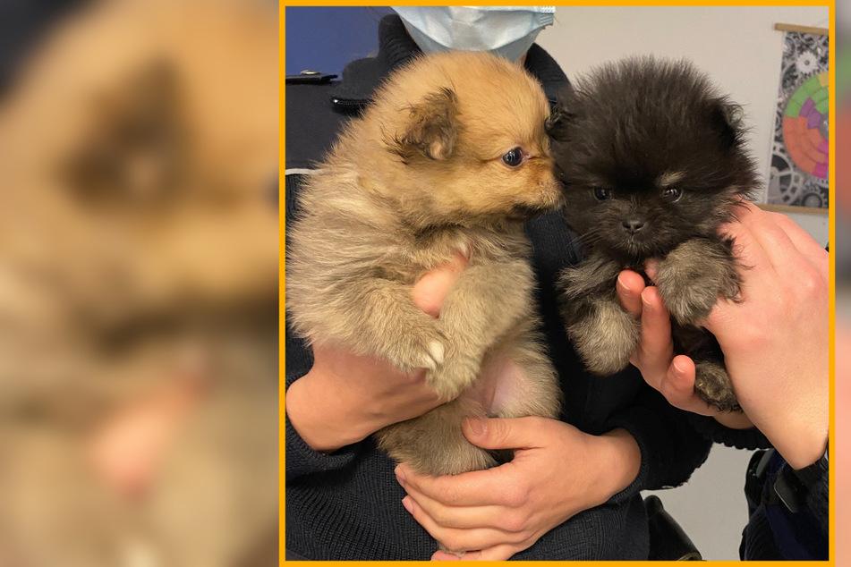 Polizei rettet süße Hundebabys nach zweifelhafter Online-Anzeige
