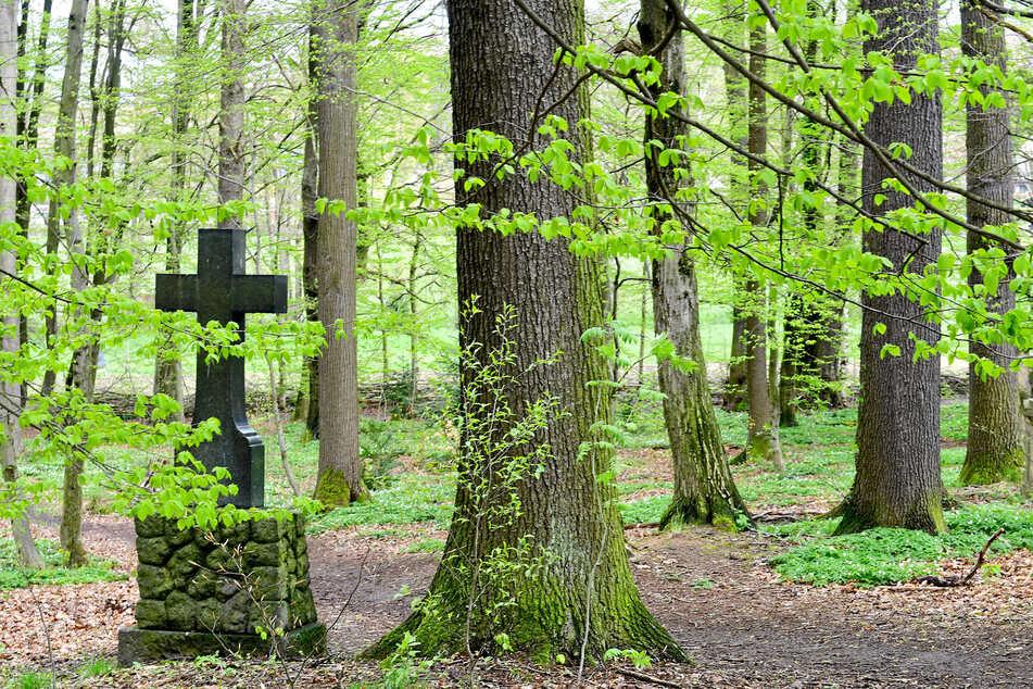Ein Kreuz steht zwischen unzähligen Bäumen.