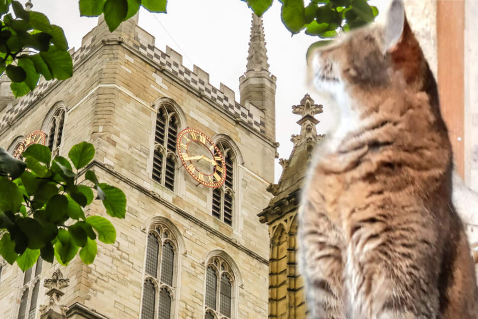 London cathedral holds heart-breaking service for its furry resident