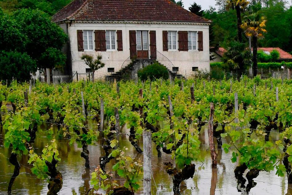 Heftiges Unwetter: Hochwasser und Regen treffen berühmtes Weinbaugebiet