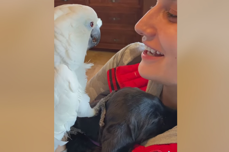 """Wendy Albright mit ihrem Papagei """"Sweet Pea"""" und dessen """"Labrador-Welpenbruder""""."""