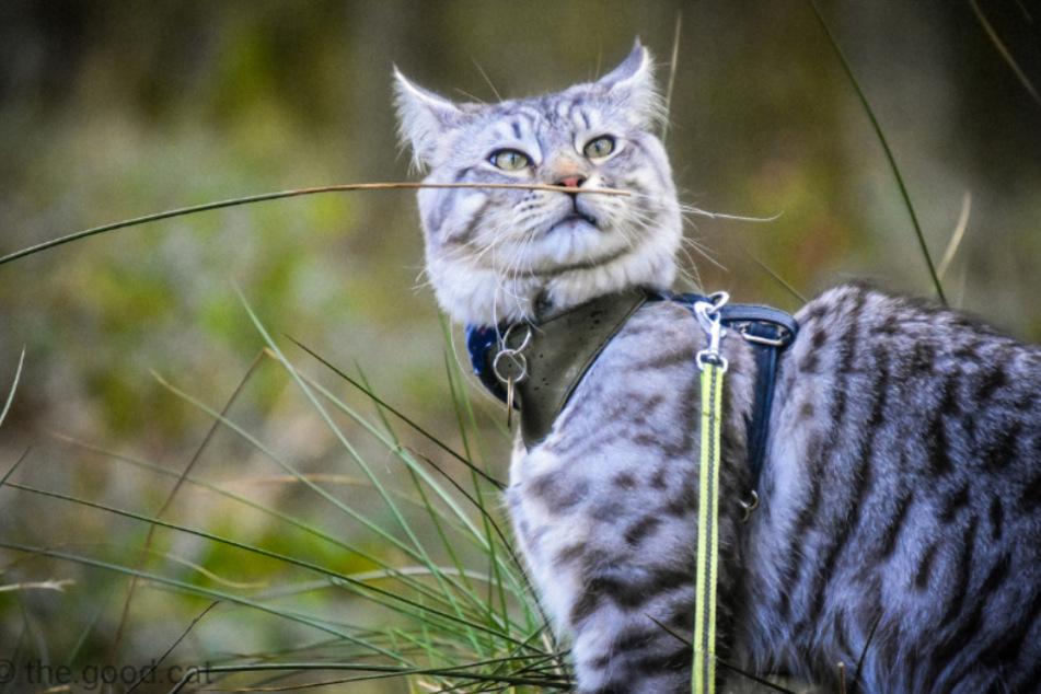 Süße Katze erlebt jede Menge Abenteuer und wird zum Social-Media-Star