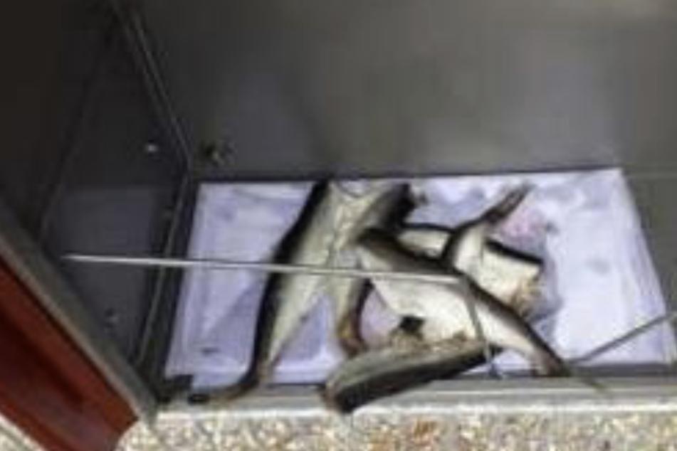 Ekel-Attacke! Rowdy wirft tote Fische in Kindertagesstätte-Briefkasten