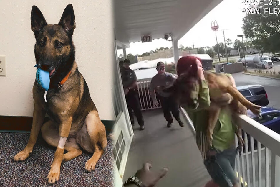 Florida woman arrested after throwing her dog off a balcony!