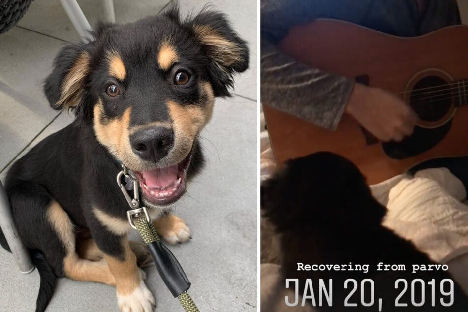 Dog dad plays guitar to help heal sick puppy