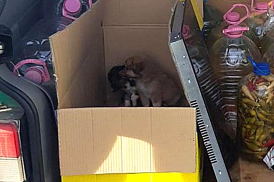 """Am Rastplatz """"Am Heidenholz"""" an der A17 zogen die Bundespolizisten einen Kleintransporter aus dem Verkehr. Im Kofferraum waren zwei Hundewelpen versteckt."""
