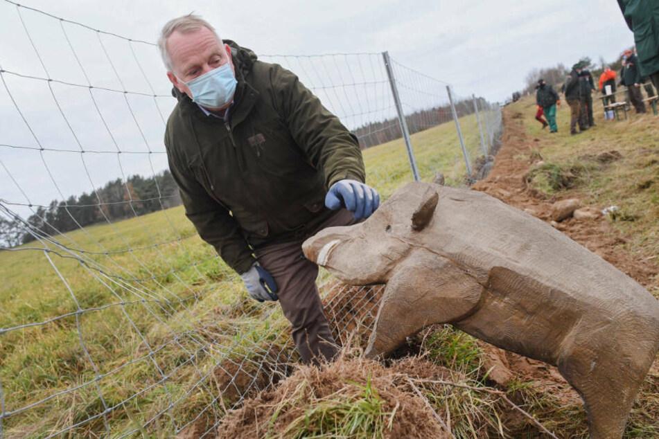 Till Backhaus (61, SPD), Landesagrarminister von Mecklenburg-Vorpommern, steht an der Grenze zwischen Polen und Deutschland an dem neuen Grenzschutzzaun zum Schutz vor der Afrikanischen Schweinepest neben der Figur eines Wildschweines.