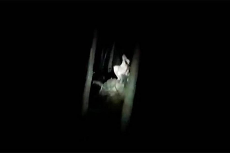 Diese seltsame Gestalt entdeckte ein Spaziergänger nachts im Wald.