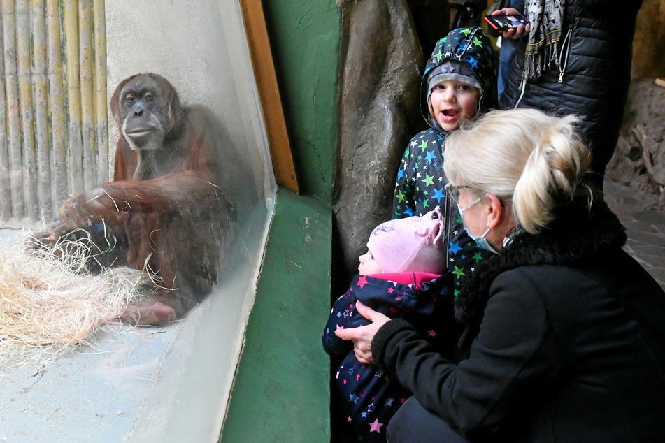Amilia (3) und Marie (neun Monate) freuen sich mit ihrer Oma über die Orang-Utans.
