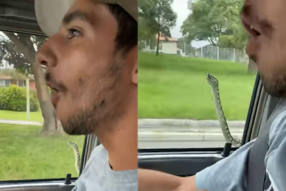 Wie kommt denn die Schlange hier an die Scheibe?
