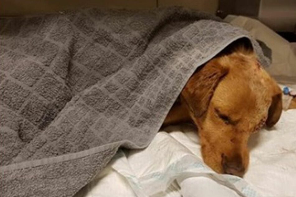 """Hund """"Oli"""" fast zu Tode geprügelt und lebendig begraben"""