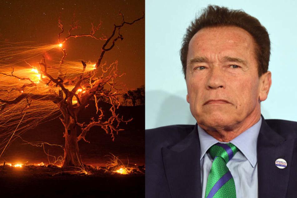 Schwarzenegger-Haus durch Waldbrände bedroht: Terminator-Star muss raus!