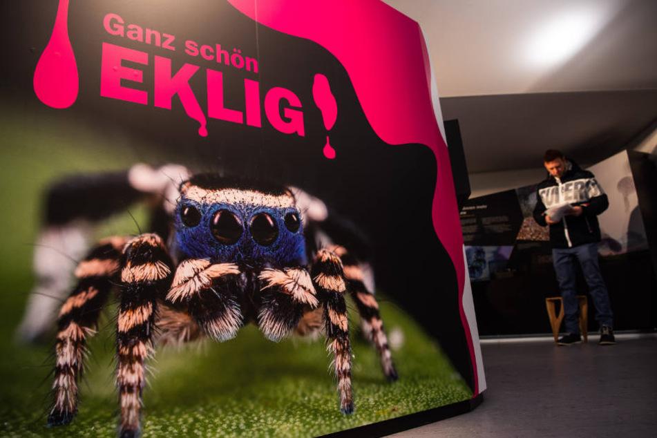 """Im Nürnberger Tiergarten findet die Ausstellung """"Ganz schön eklig"""" statt."""
