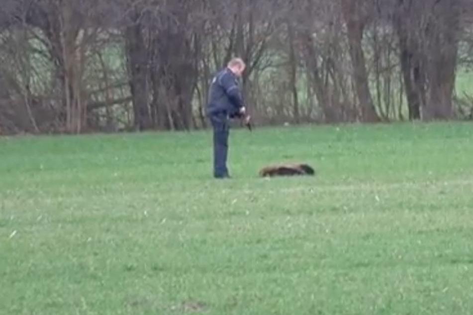 Die Polizei sah sich am Samstag gezwungen, die Tiere zu töten.