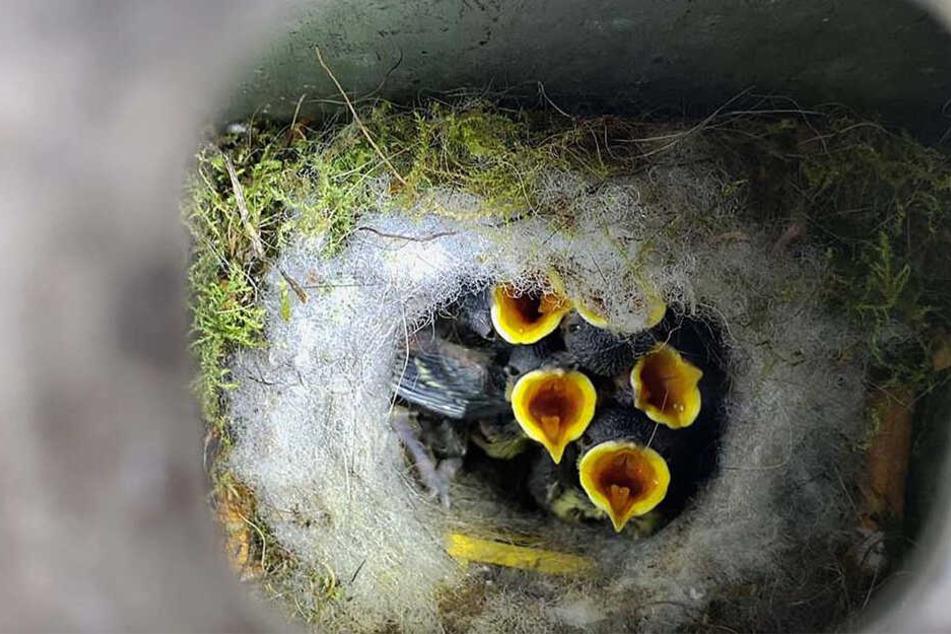 """In dem Aschenbecher hatten sich die Vögel zum Nisten """"eingemietet""""."""
