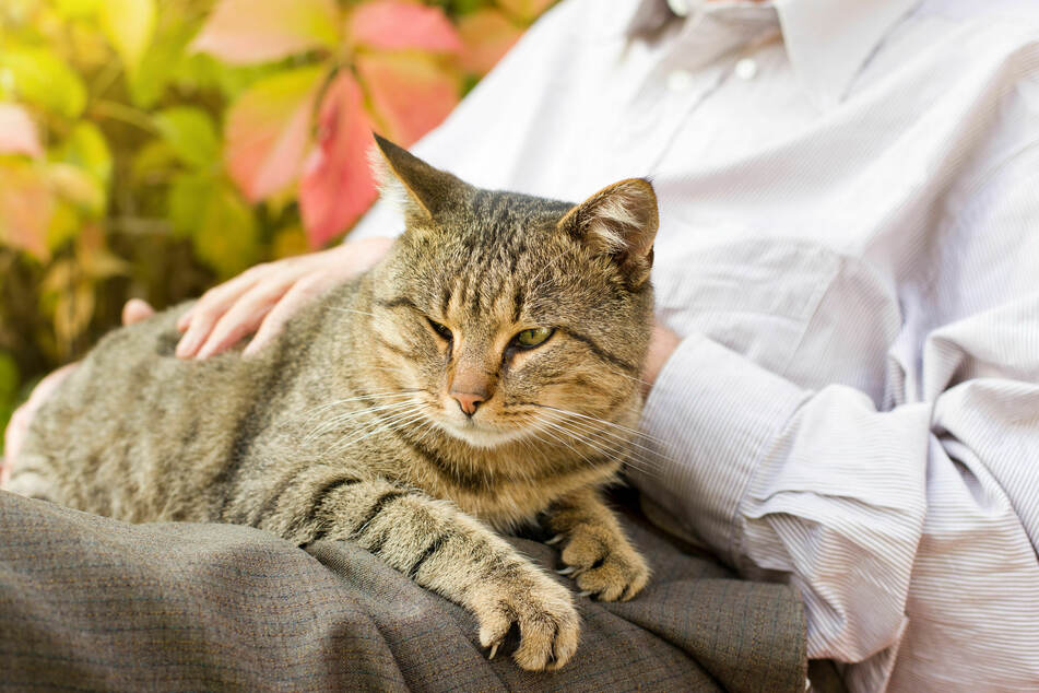 Wouldn't it be nice to know what goes on in your cat's mind? (stock image)