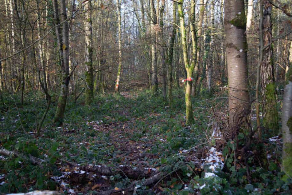 In einem Waldstück fanden die Jäger sterbliche Überreste.