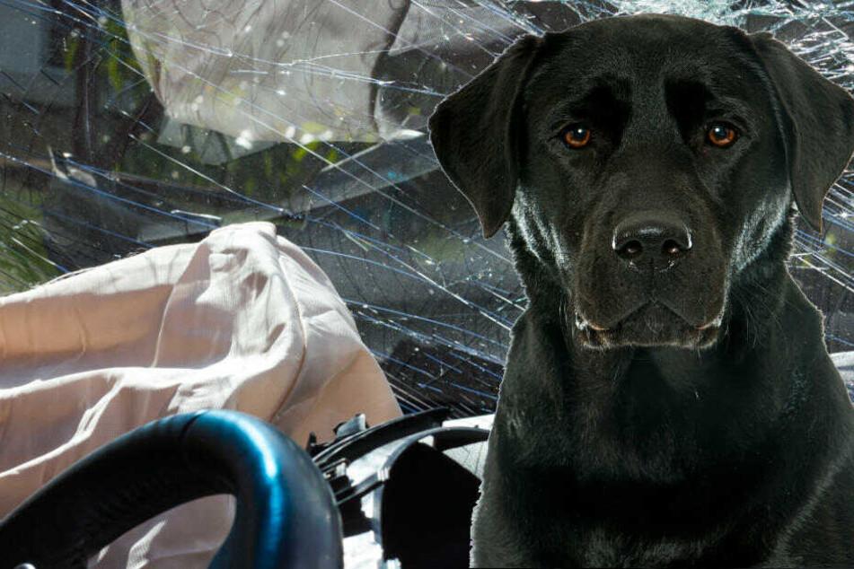 Todes-Drama, weil entlaufender Hund über die Straße rennt: Frau überschlägt sich mit ihrem Auto