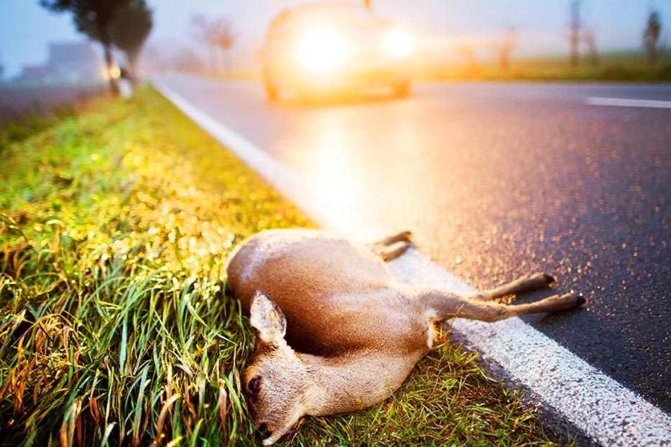 Nicht nur große Tiere wie Rehe und Rotwild sind von Wildunfällen betroffen, auch Kleintiere wie Hasen und Füchse werden Opfer von Kollisionen mit Autos.