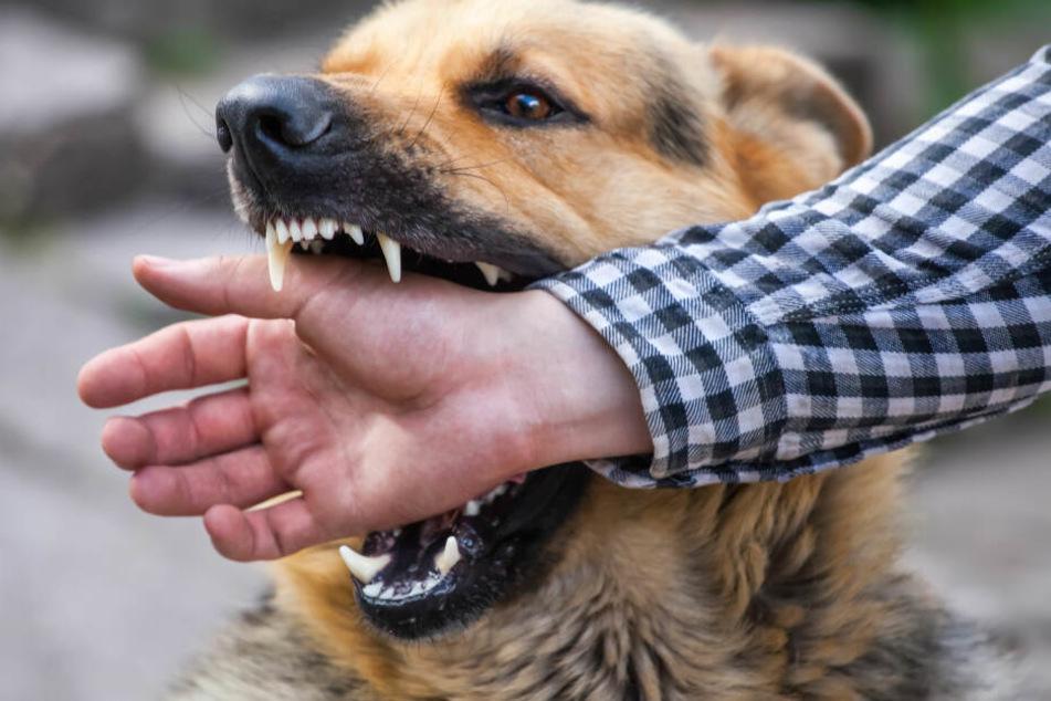 Beiß-Attacken und illegaler Online-Handel mit Hunden und Katzen: So soll das Problem behoben werden