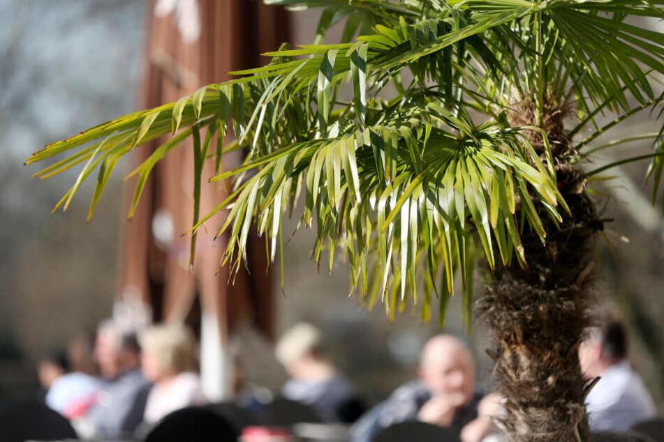 Die Palmen waren mit einem GPS-Sender ausgestattet. (Symbolbild)
