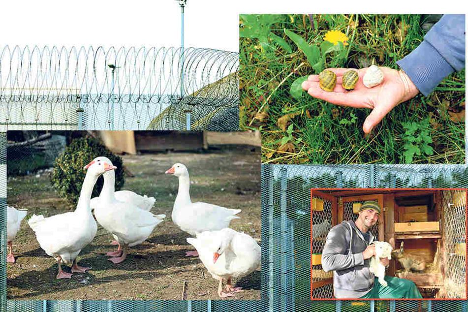 Eine Delikatesse: In der JVA Zeithain werden neben anderem Getier sogar gefleckte Weinbergschnecken gezüchtet -zum späteren Verzehr!