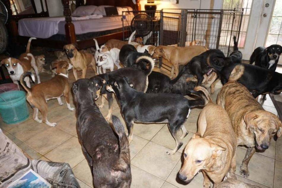 Als der Hurrikan kommt, wird eine Frau zur Hunde-Heldin