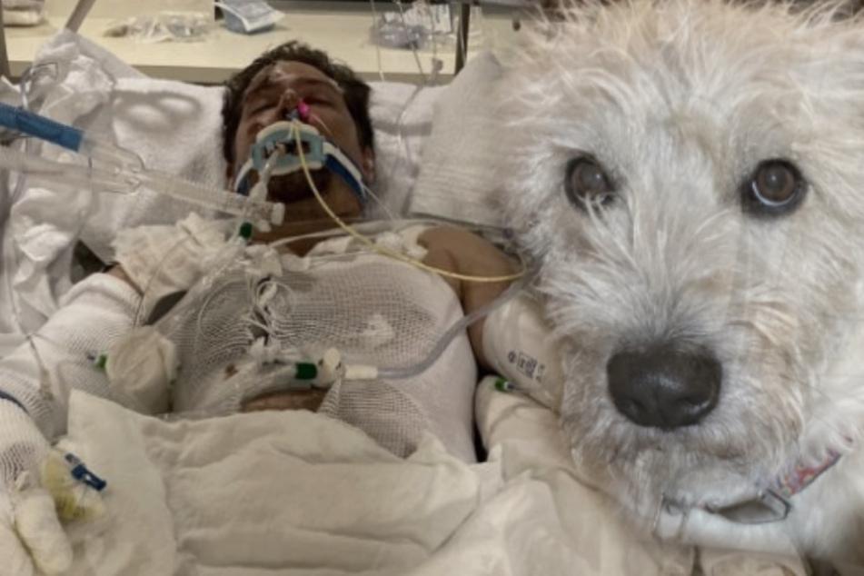 Tragischer Held: Hund rettet sein Herrchen vor dem sicheren Tod und stirbt dabei selbst!