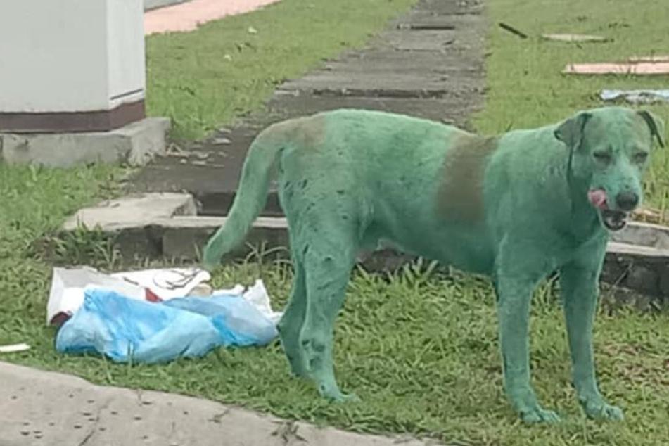 Ganz grün stand der Hund auf einmal auf der Straße.
