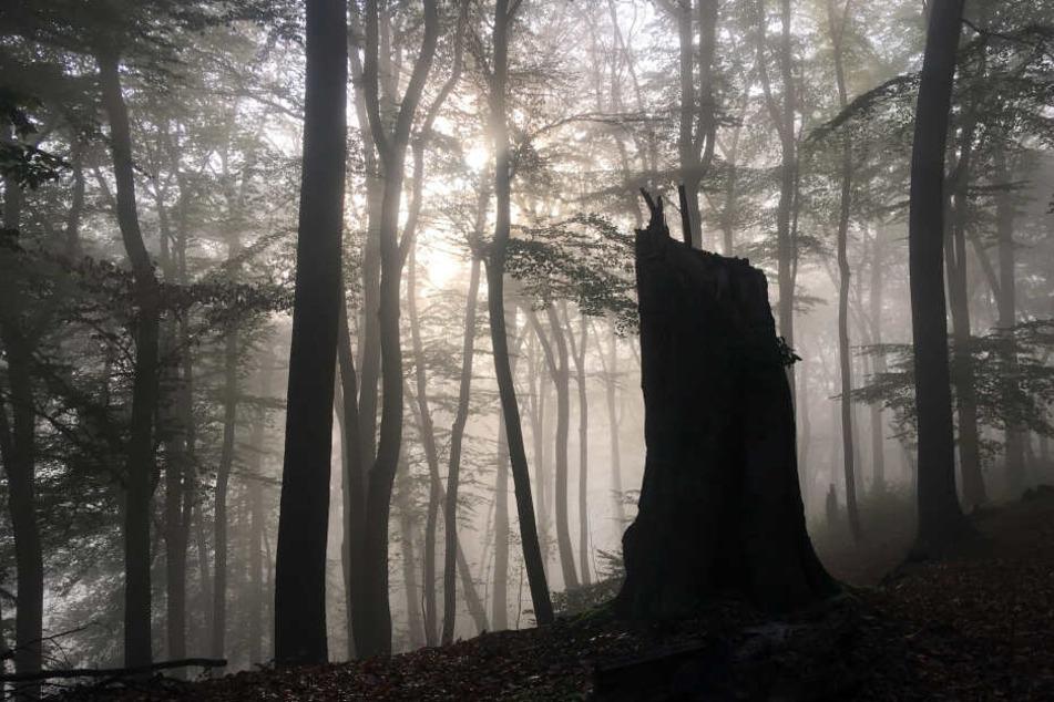 Nur jeder fünfte Baum ist intakt: So will NRW den Wald retten