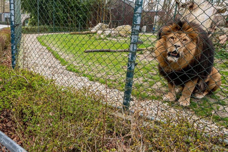 Selbst die Tiere fühlen sich ohne den Trubel der Besucher einsamer. (Archiv)