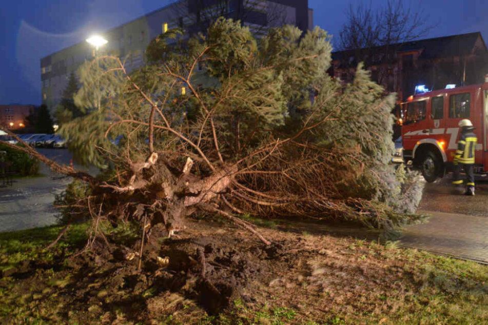 Ein Baum liegt quer auf der Fahrbahn zwischen Niemtsch und Peickwitz.