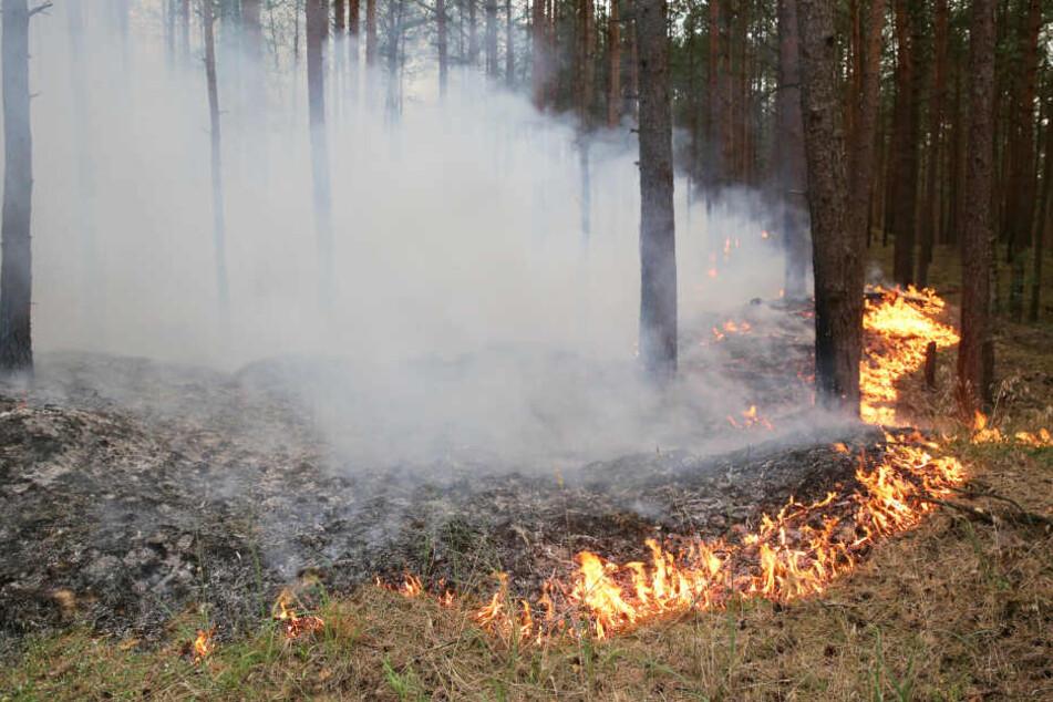 Flammen fressen sich durch den Wald in Lübtheen.