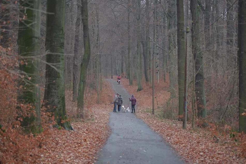 Schaftreibe- und Irrbornweg im Küchwald sind unbeleuchtet. Das soll sich nach dem Willen des Stadtrats ändern.