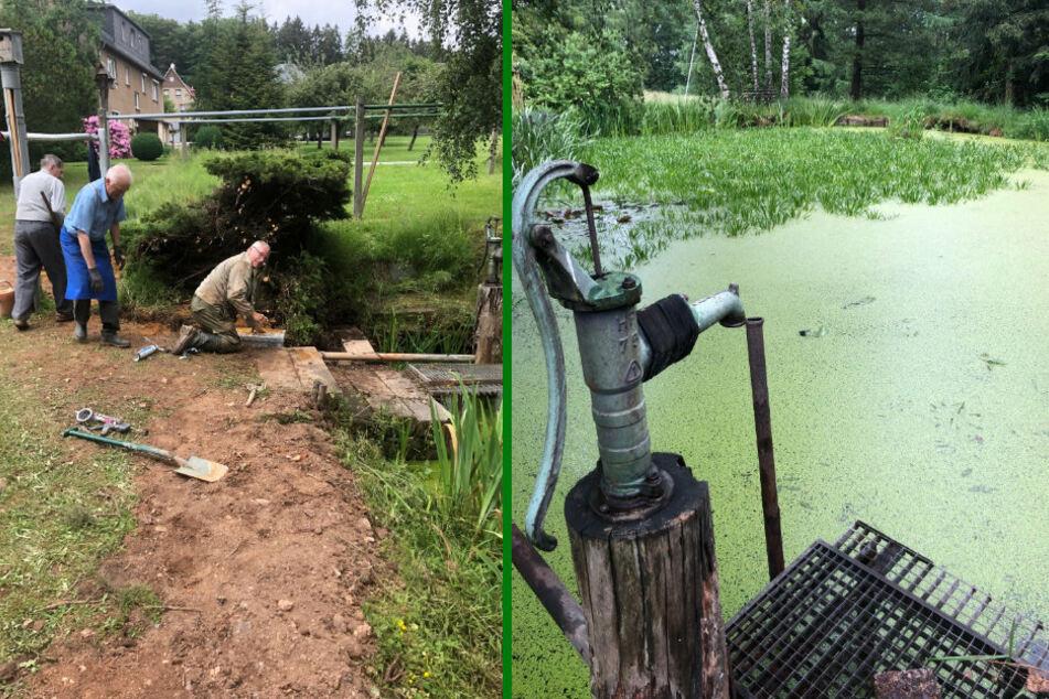 Wassermarsch! Grünaer wollen verlandeten Teich retten