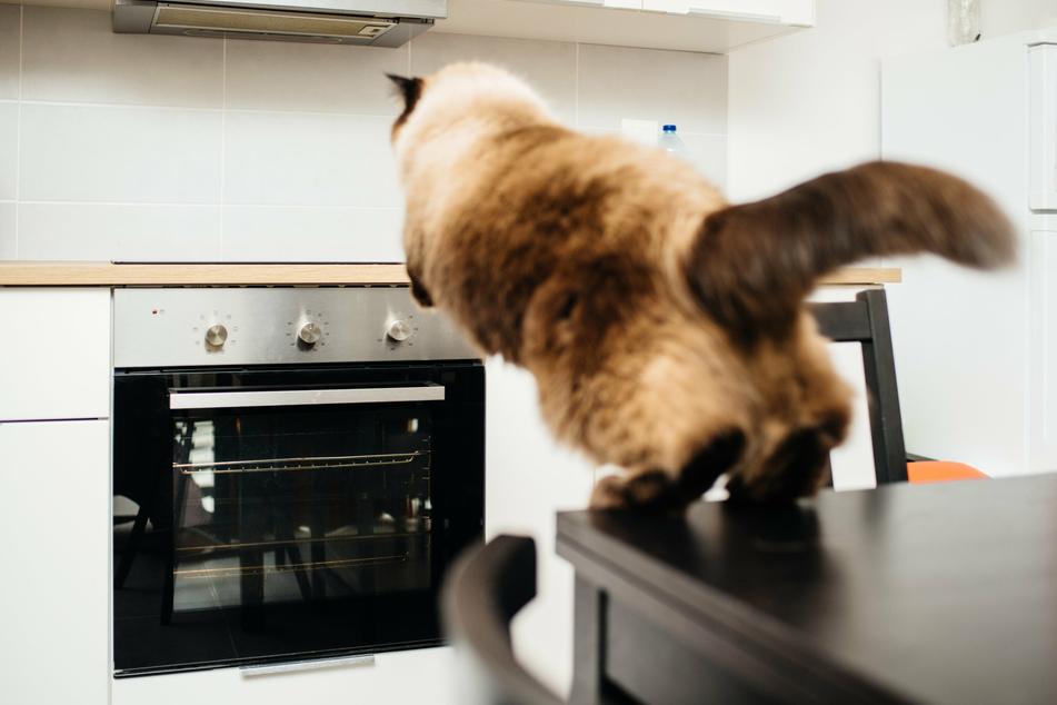 In Sachsen-Anhalt haben offenbar zwei Katzen ein Kochfeld eingeschaltet und somit fast einen Brand verursacht. (Symbolbild)