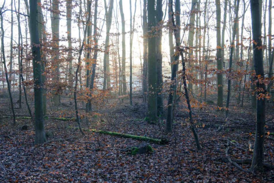 Die Spaziergängerin fand das tote Tier in einem Waldstück (Symbolfoto).