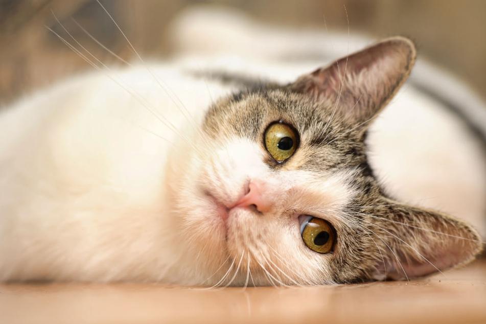 Die Besitzer fanden ihre Katze schwer verwundet vor (Symbolfoto).