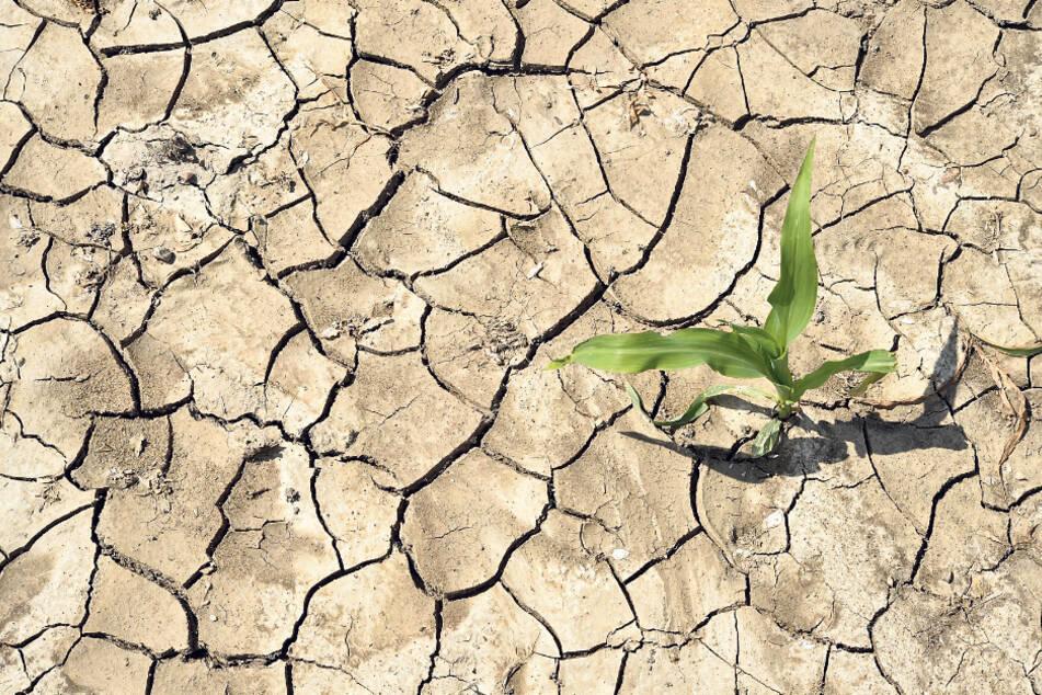 Warum ein sonniger Mai für unsere Landwirtschaft so verheerend wäre