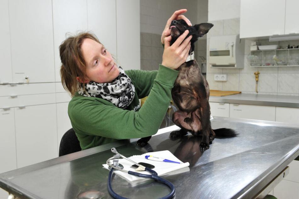Sie kennt das Problem: Tierärztin und stellvertretende Leiterin Dr. Anne Schilling (31) kümmert sich um das Wohl der Tiere im Tierheim Chemnitz.
