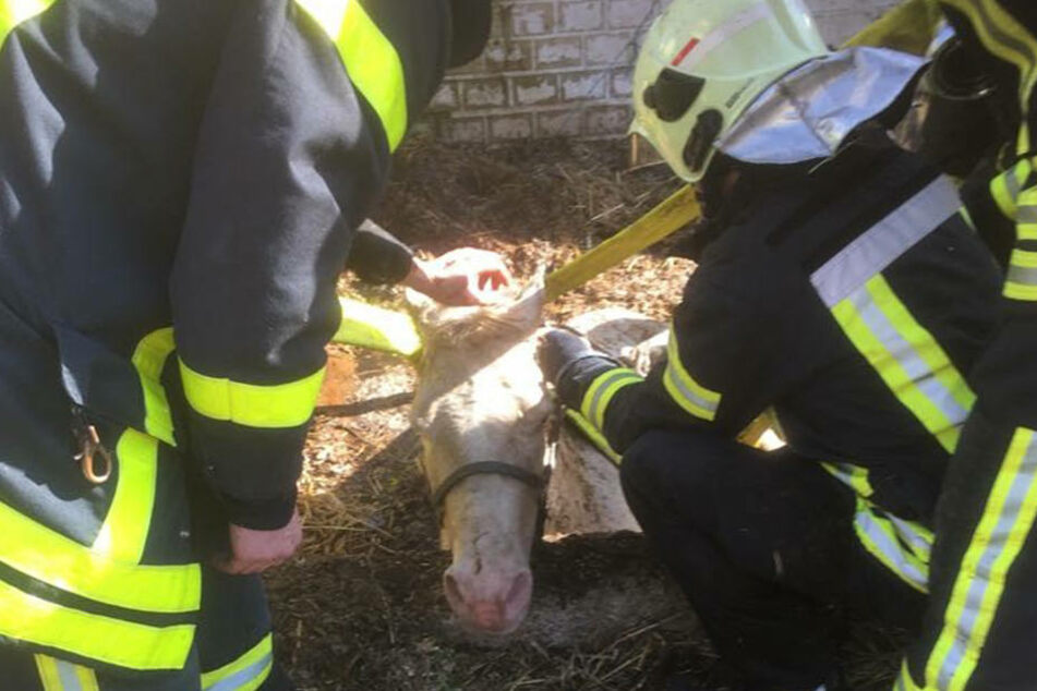 20 Rettungskräfte versuchten das Tier aus seiner misslichen Lage zu befreien.