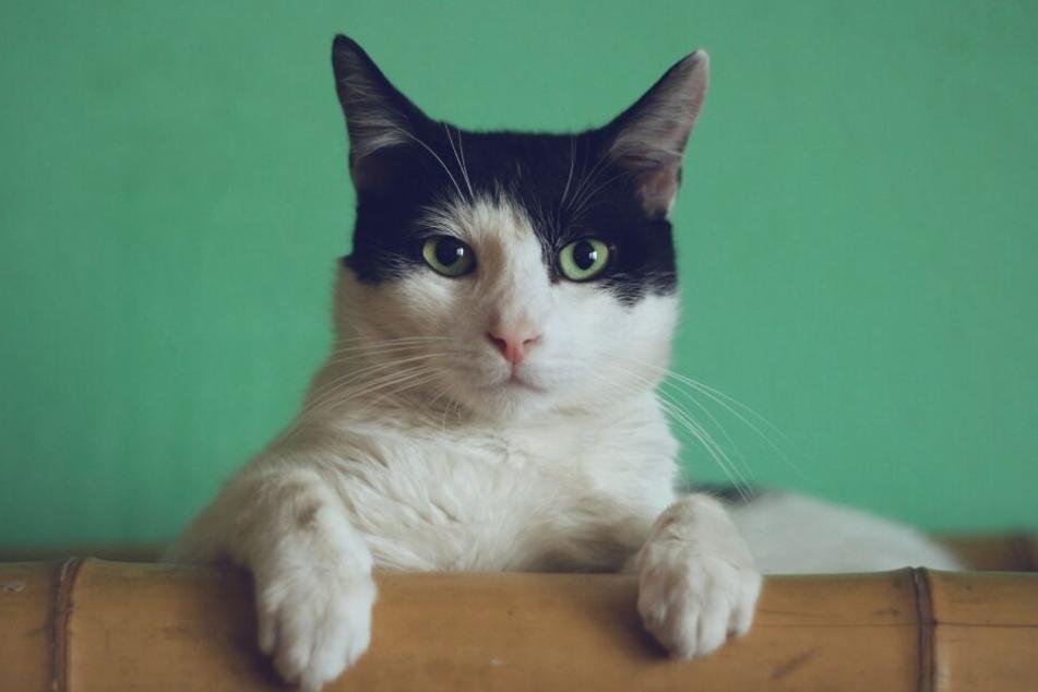 Darf man Katzen in Mietwohnung halten?