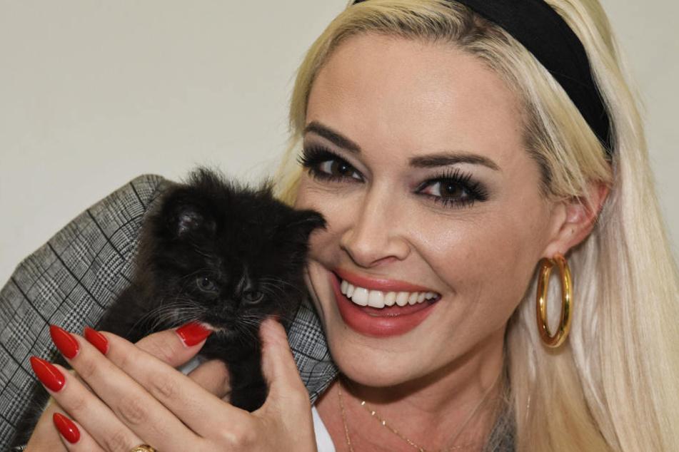 Auf Instagram zeigte sich TV-Star Daniela Katzenberger (32) als richtige Katze.