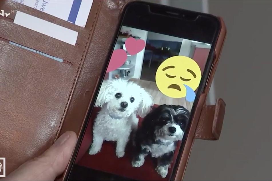 Ein Bild aus glücklichen Tagen: Molly (†7) und Luna (†13) gucken in die Handykamera.