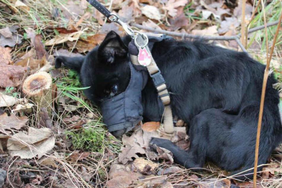Damit sich der kleine Hund nicht bemerkbar machen konnte, wurde ihm die Schnauze verbunden.