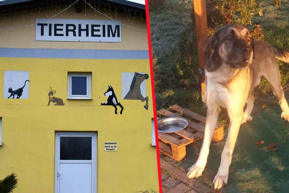 Tierheim-Mitarbeiter trauen ihren Augen nicht, als sie auf Arbeit kommen