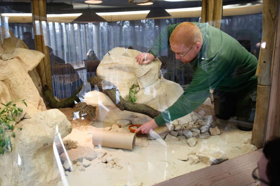 Tierpfleger Rocco Nollau (34) stellt Körner in die neue Anlage.